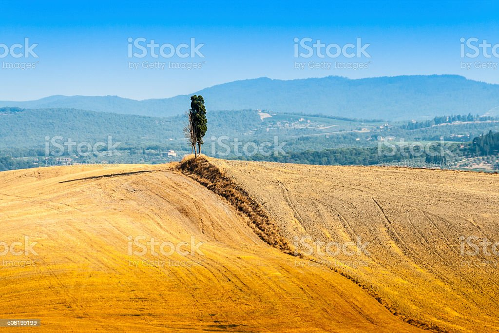 lonely cypress near Asciano in Crete Senesi, Tuscany, Italy stock photo