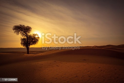 lonely desert tree silhouette at sunset at the wahiba sands desert in the sultanate of oman.