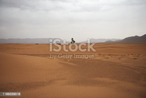 A lonely tree in the Sahara Desert with mountains in the background.