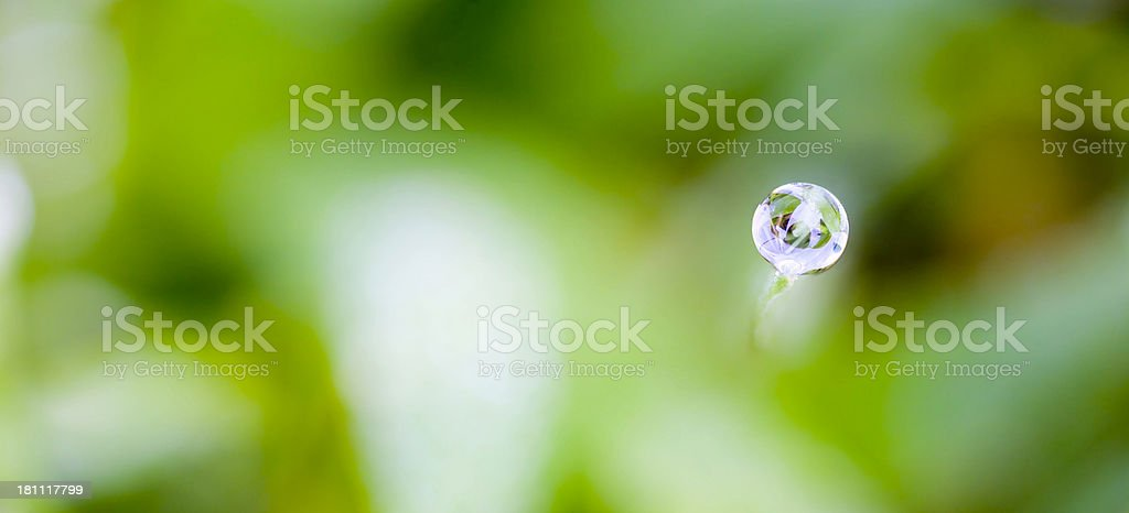 lonely dew drop stock photo