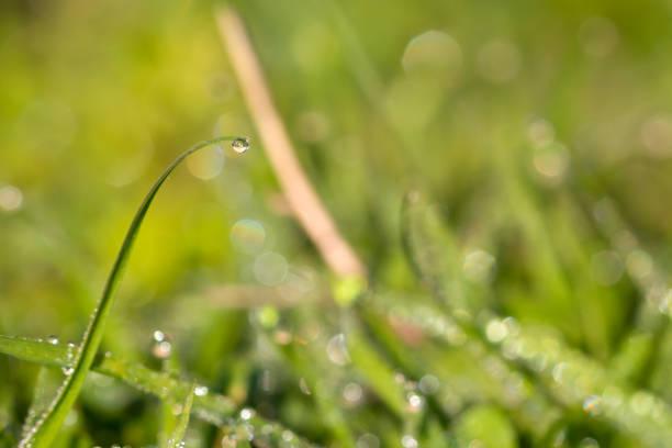 Solo Rocío agua caída de gota en una hoja de hierba. - foto de stock