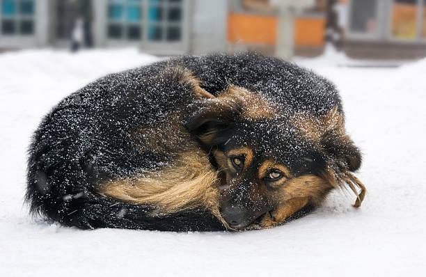 Lonely dog freezing on the street while snowing picture id638285756?b=1&k=6&m=638285756&s=612x612&w=0&h=eiec zycw6rgh7 oqzyu24c0oiiwpc3 jjvhrnr8hni=