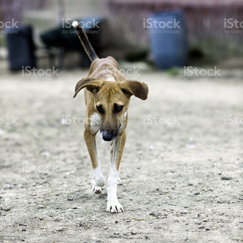 Lonely dog royalty-free stock photo