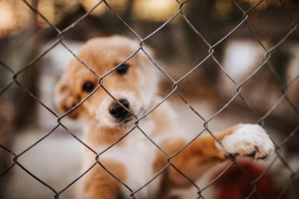 einsamen hund welpen - hunde aus dem tierheim stock-fotos und bilder