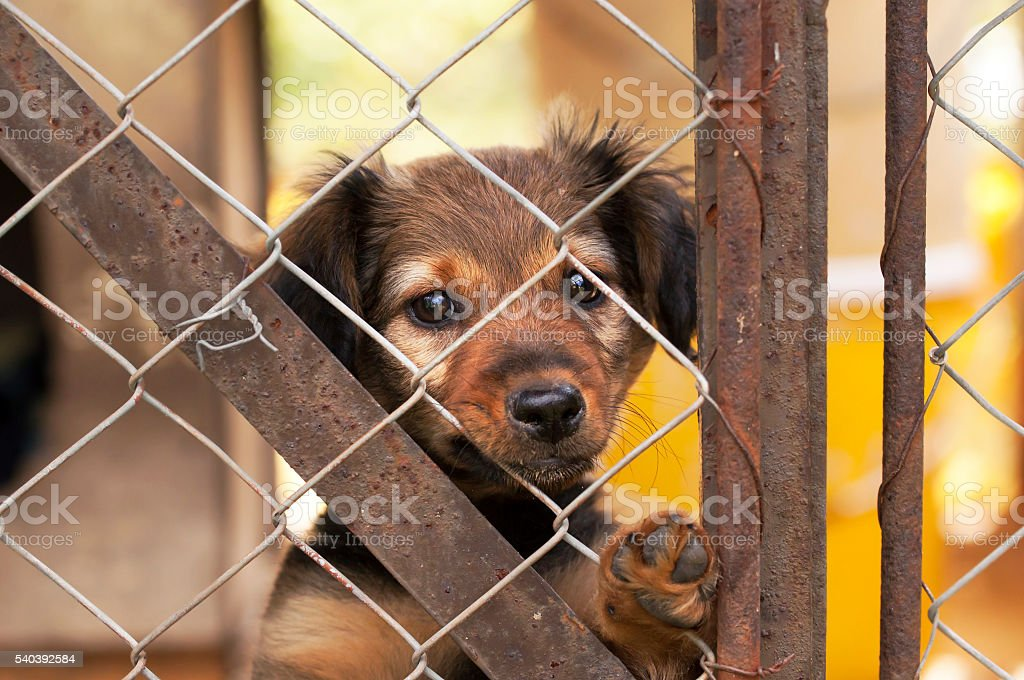 Lonely dog puppy stock photo