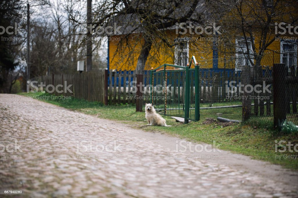 Lonely dog sitting outdoor near the house stock photo