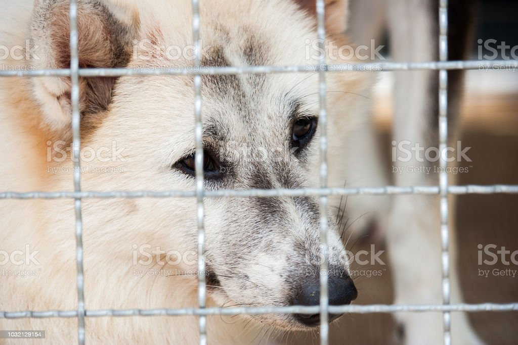 Lonely dog was trapped in cage and waiting for rescued from human....