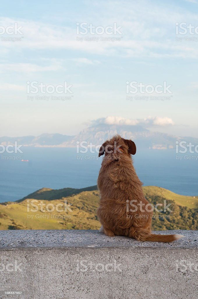 Lonely dog watching on other sea side royalty-free stock photo