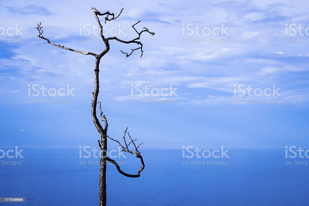 Lonely dry tree royalty-free stock photo