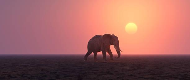 einsam elefant fuß in öde landschaft - elefanten umriss stock-fotos und bilder