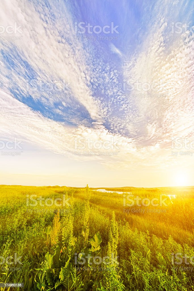 Lonely field with sunset royalty-free stock photo