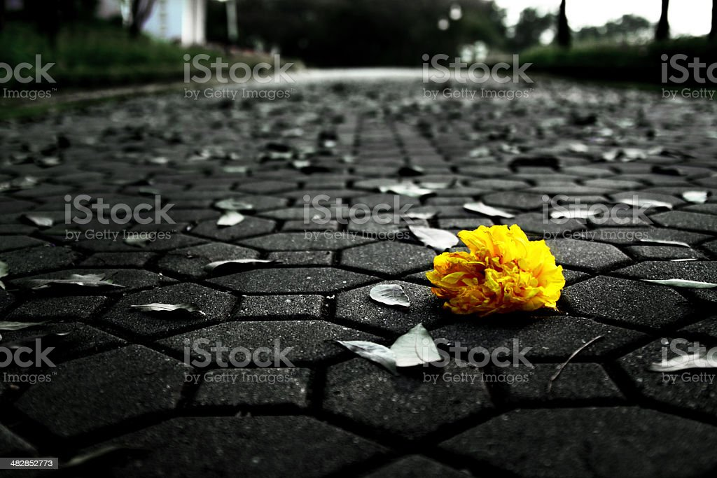 lonely flower expressing down emotion royalty-free stock photo