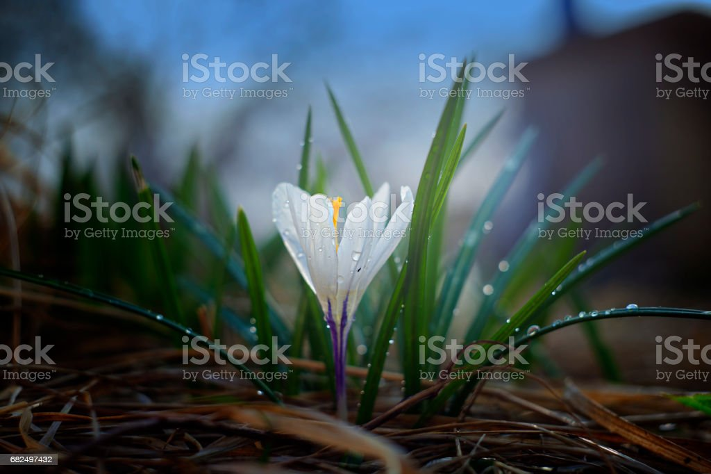 Lonely flower in pleasant light royalty-free stock photo