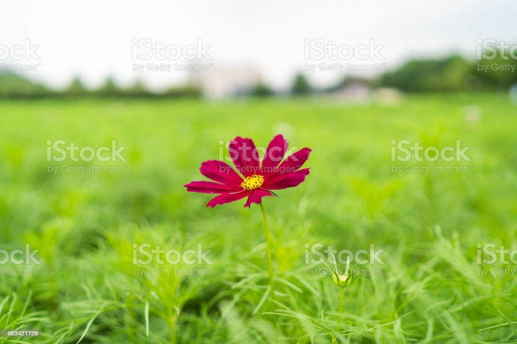 En ensam blomma - Royaltyfri Avkoppling Bildbanksbilder