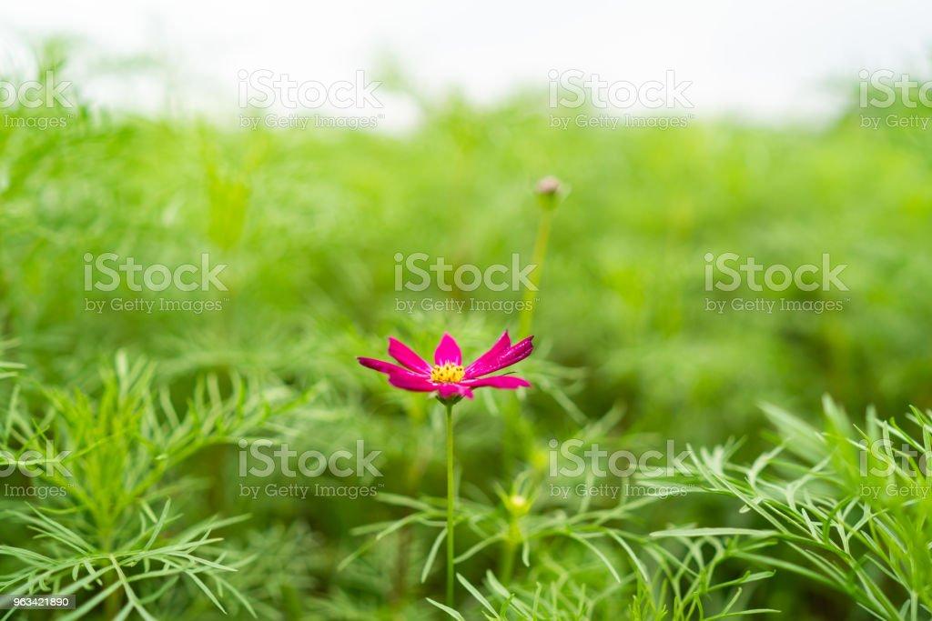 Une fleur solitaire - Photo de Adulte libre de droits