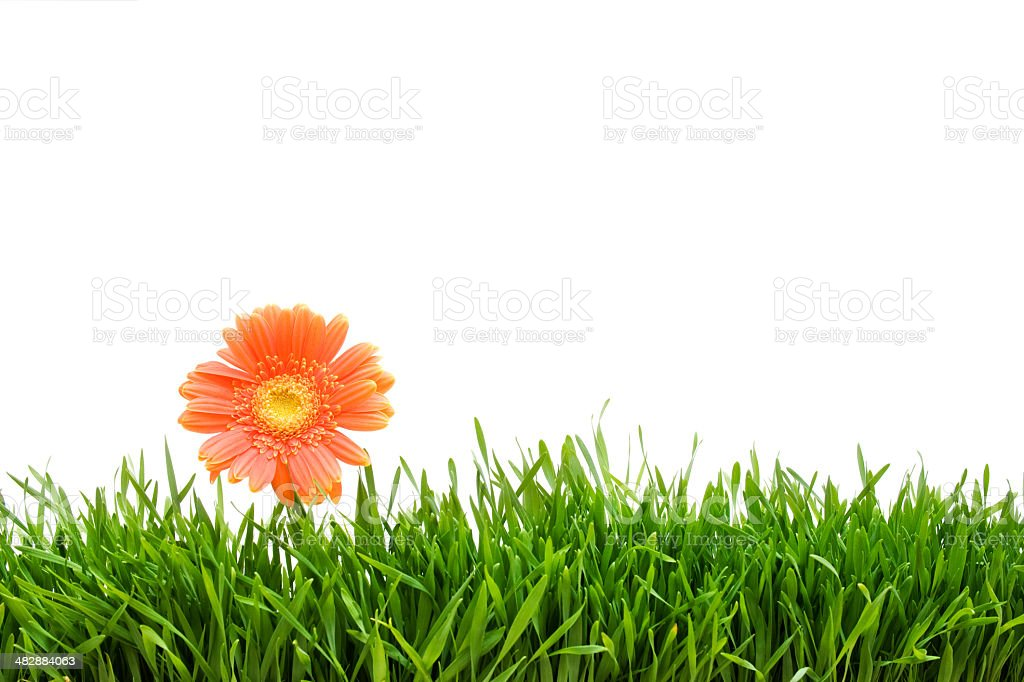 lonely flowers royalty-free stock photo
