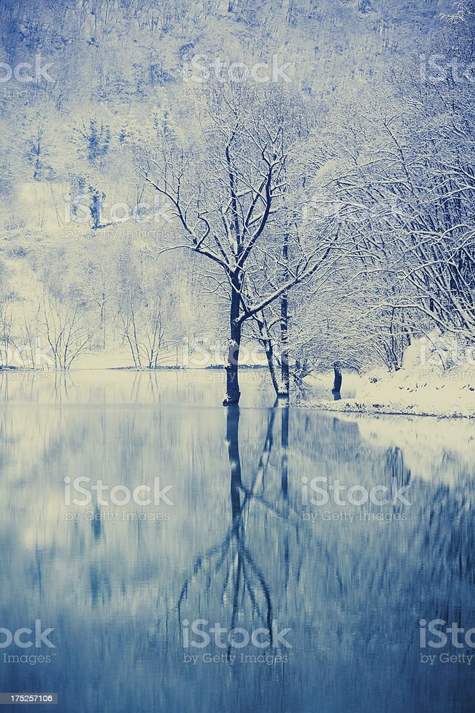 Lonely Frozen Tree Reflected on the Lake, Snowy Winter Landscape royalty-free stock photo