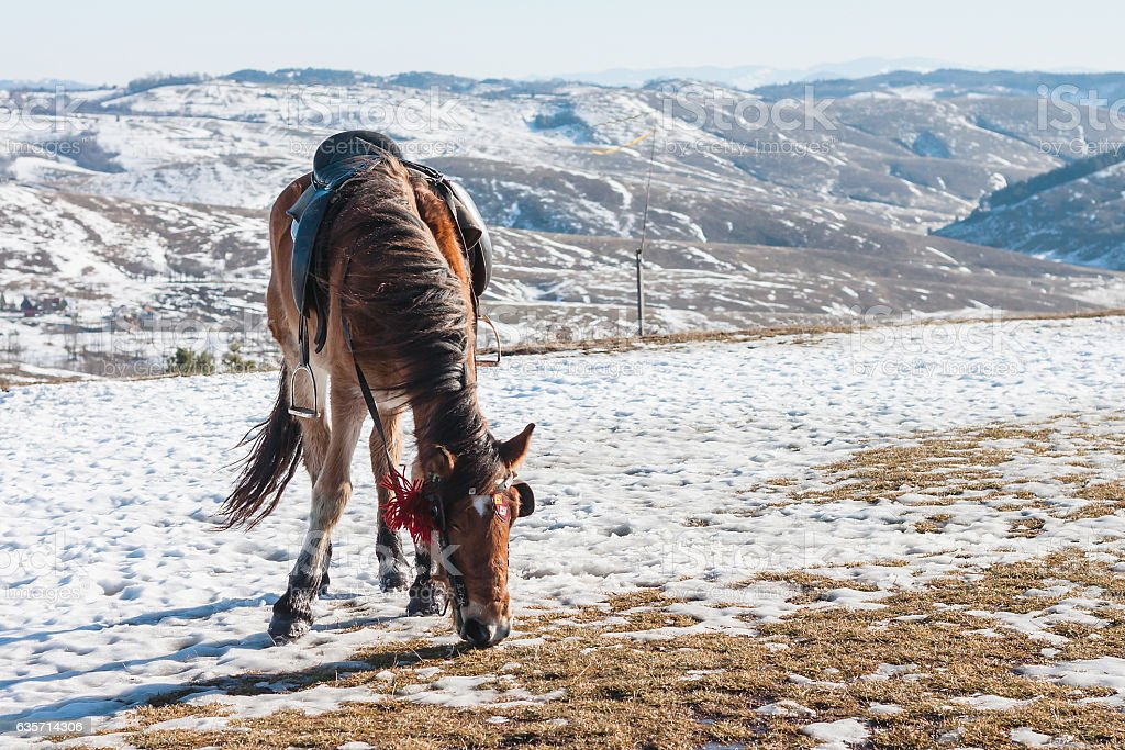 Lonely Grazing Horse in the Winter Steppe, Zlatibor Mountain, Serbia royalty-free stock photo