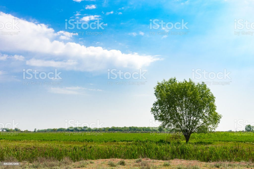 Lonely green tree royalty-free stock photo