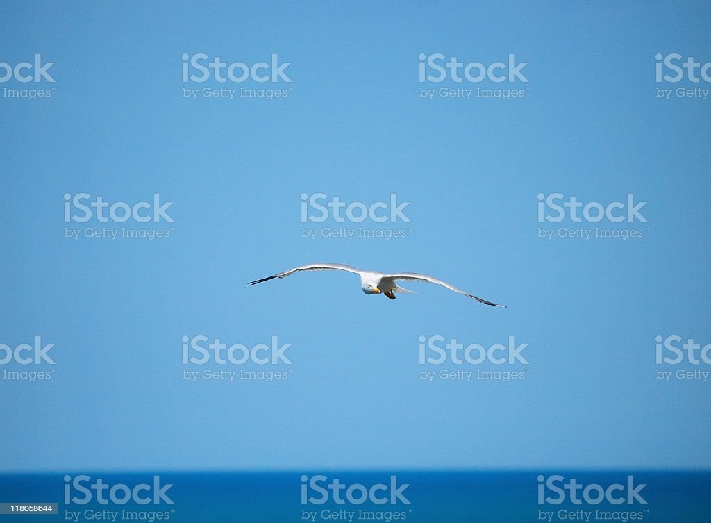Lonely gull royalty-free stock photo