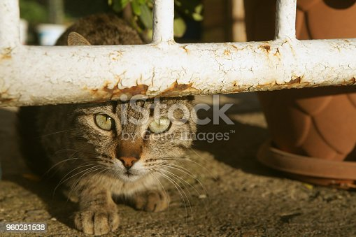 Lonely homeless cat is looking at camera