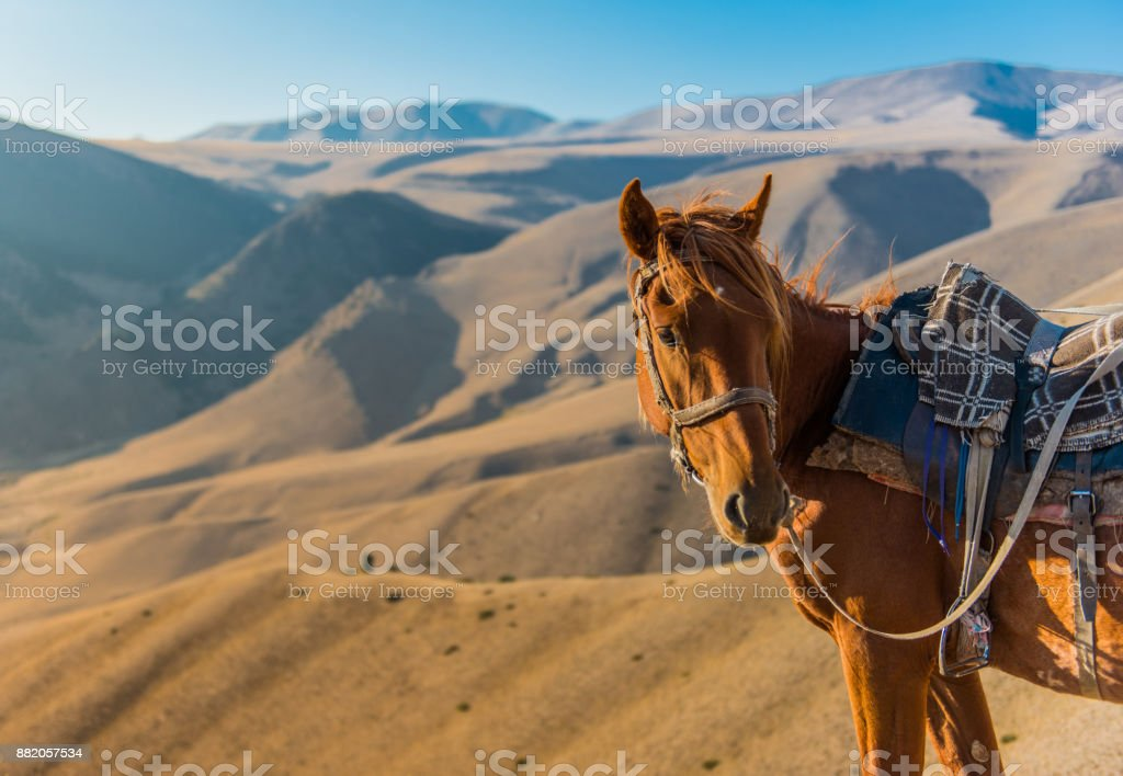 Lonely horse in Kazakhstan steppe stock photo