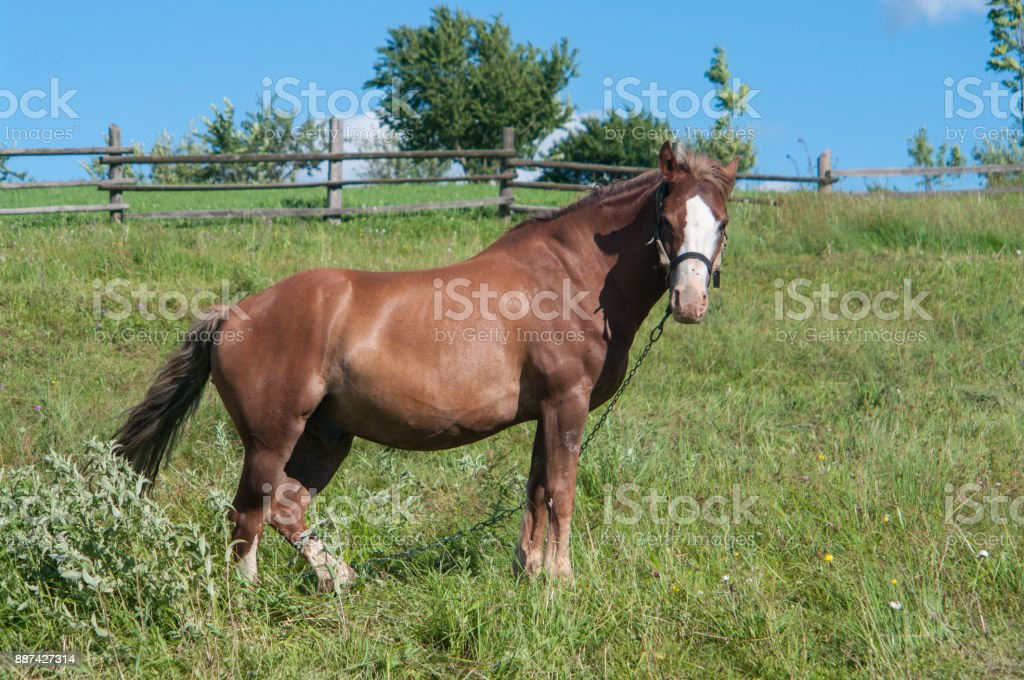 Lonely horse is grazing off the grass in a village stock photo