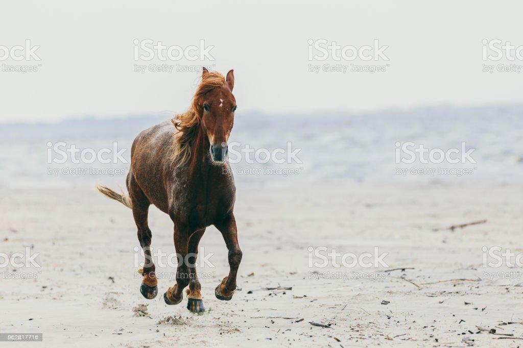 Cavalo solitário pisando na praia. - Foto de stock de Andando royalty-free