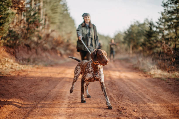 Lonely hunter Women holding gun and leading with dog hunting dog stock pictures, royalty-free photos & images