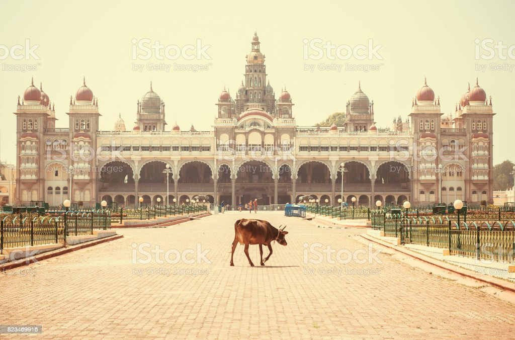 Lonely indian cow walking past famous building of the royal Palace of Mysore in Indo-Saracenic style, India. stock photo