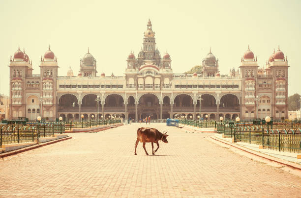 Lonely indian cow walking past famous building of the royal Palace of Mysore in Indo-Saracenic style, India. Lonely indian cow walking past famous building of the royal Palace of Mysore in Indo-Saracenic style, Karnataka state, India bangalore stock pictures, royalty-free photos & images