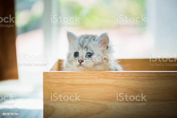Lonely kitten in box picture id852679794?b=1&k=6&m=852679794&s=612x612&h=zrbx0gb6uggy v2zx1zxh3nlrixxl0ndosnkqkdi8aq=