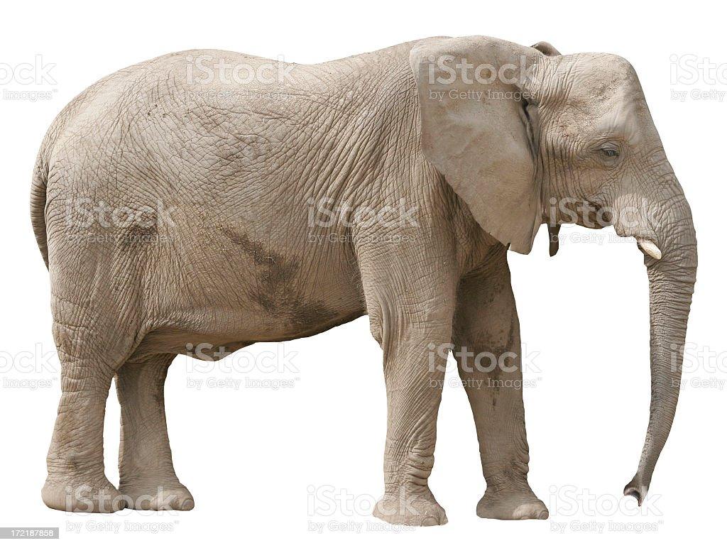 A lonely looking elephant all by himself stock photo