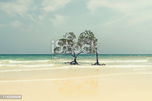 lonely mangrove tree in clay, retro style. Beautiful mangrove trees with lush deciduous crown in the sea water on a clean beach on the background of the sea and cloudy sky. Uninhabited Andaman island.
