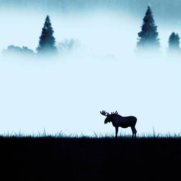 Lonely moose eating in the morning picture id1147527957?b=1&k=6&m=1147527957&s=612x612&w=0&h=k 9qhkaqefbxthcwtisbldzopiokqud2xpcs2bqvfku=