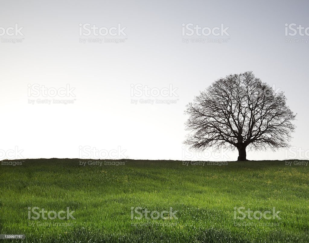 Lonely Old Tree stock photo
