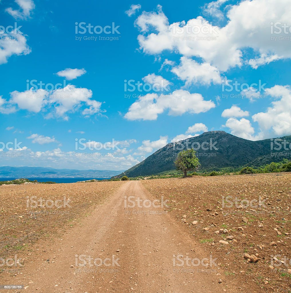 lonely olive tree at dirt road stock photo