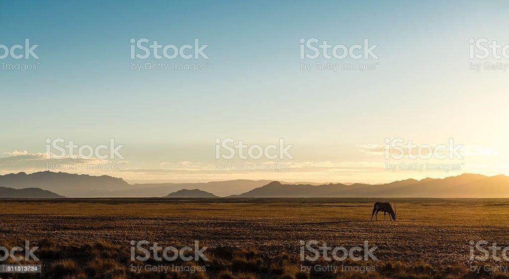 Oryx solitaire dans le désert en Namibie - Photo