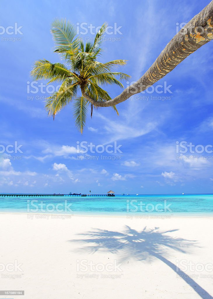 Lonely palm on tropical beach. royalty-free stock photo