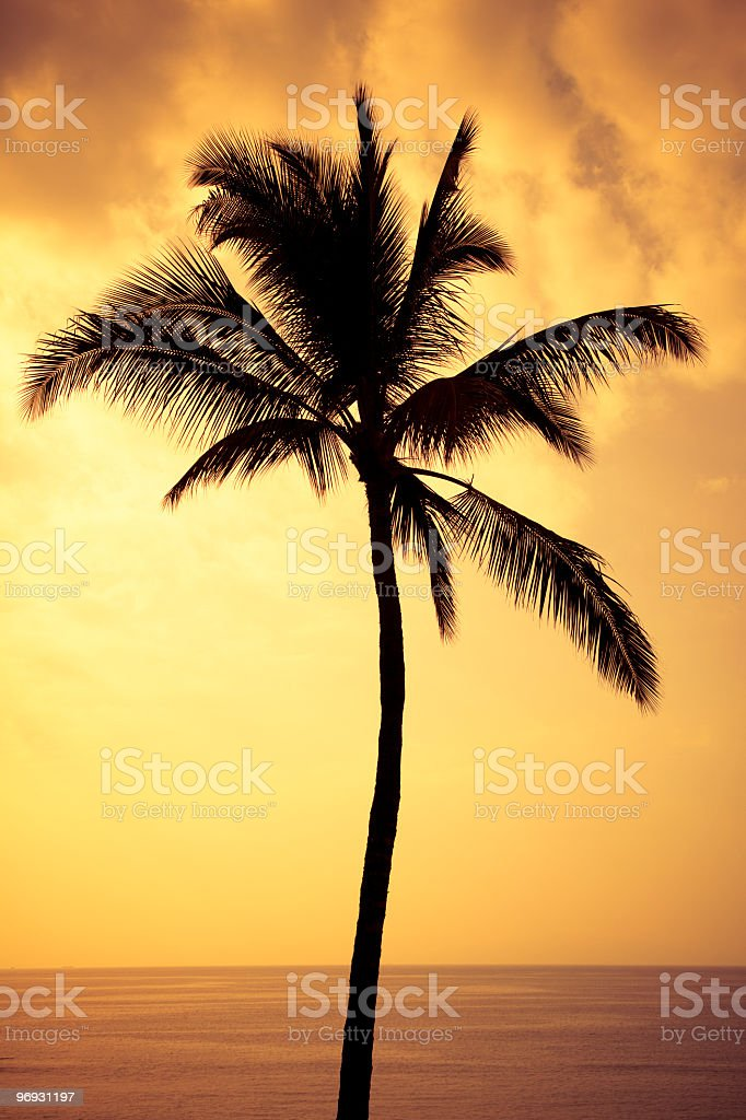 lonely palm tree at sunset royalty-free stock photo