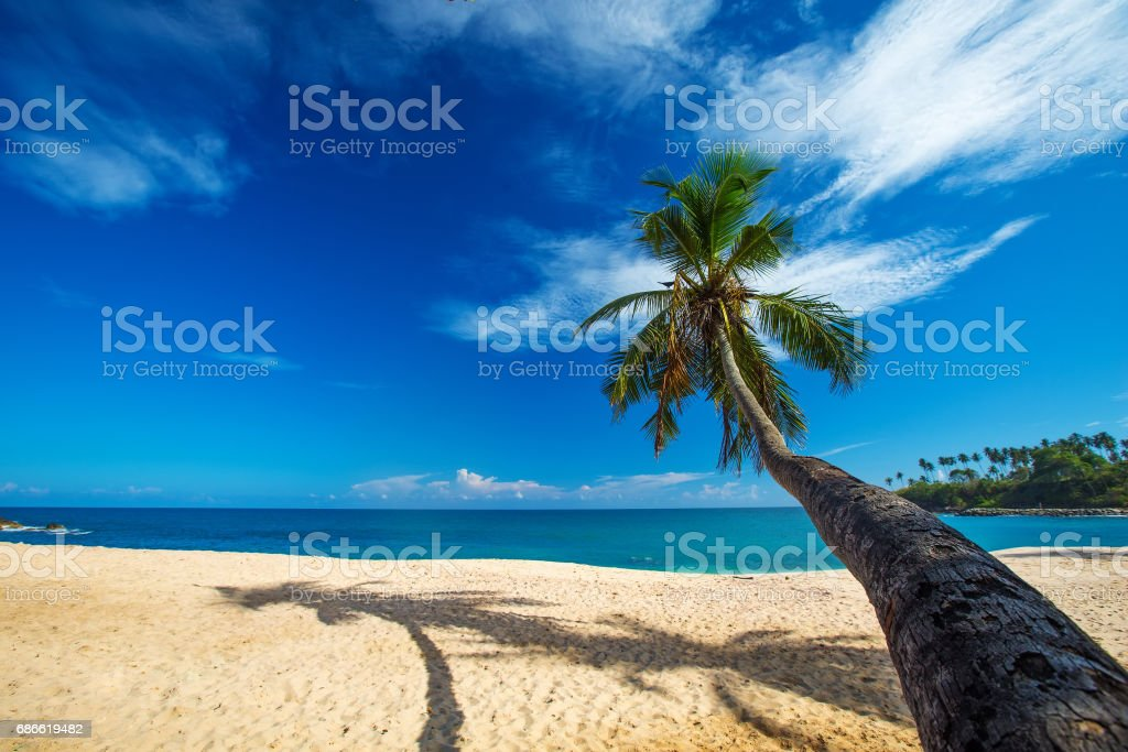 Lonely palm tree at the beach of tropical sea royalty-free stock photo