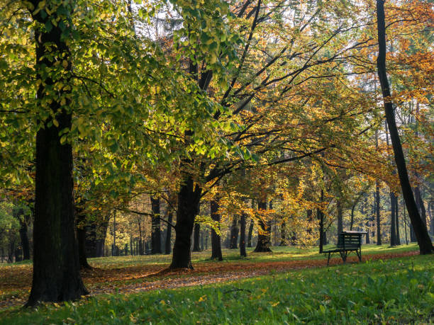 lonely park bench on the background of autumn leaves – zdjęcie