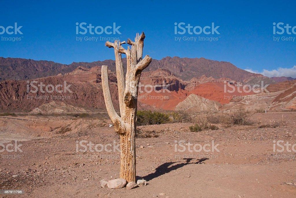lonely stock photo