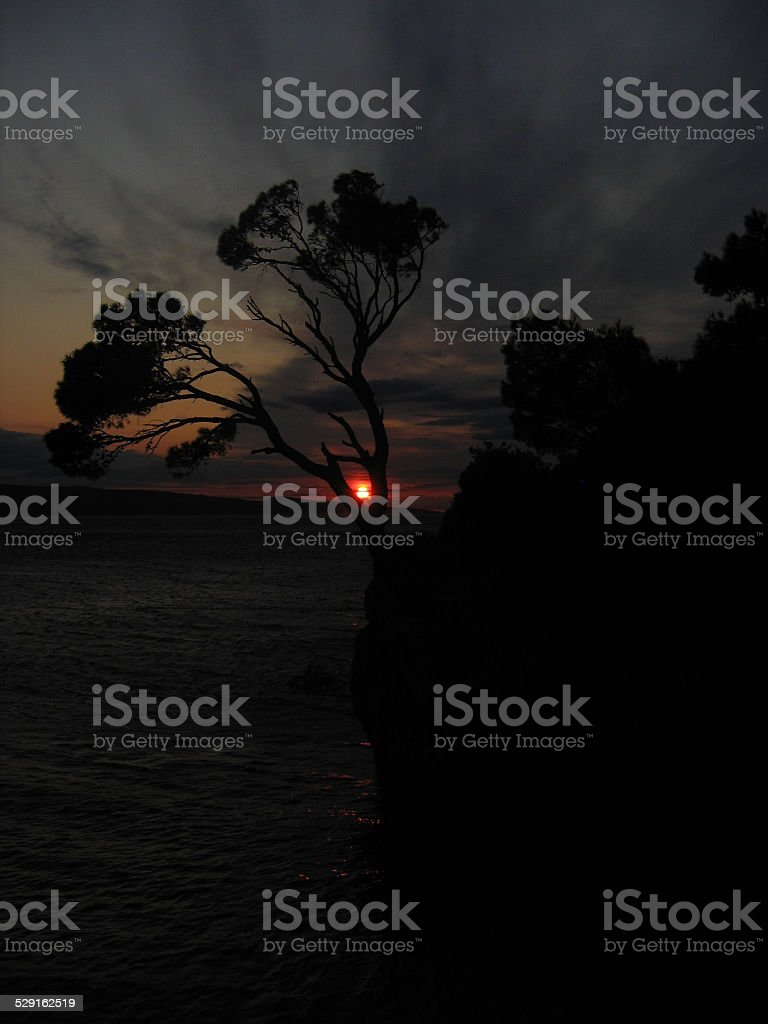 Lonely pine tree on islet at sunset, Croatia stock photo
