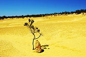 Lonely Plant growing in Bright Yellow Desert, Western Australia