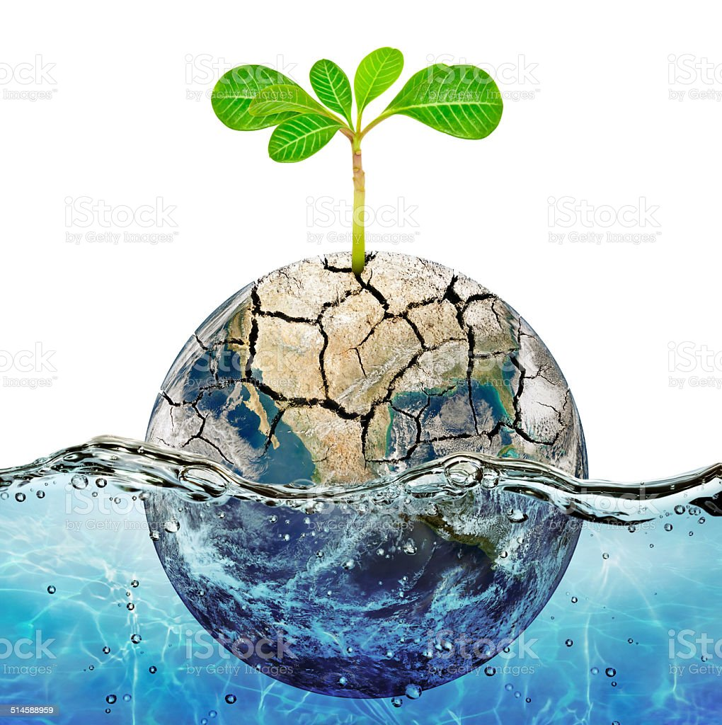 Lonely plant in the parched earth submerged in the ocean stock photo