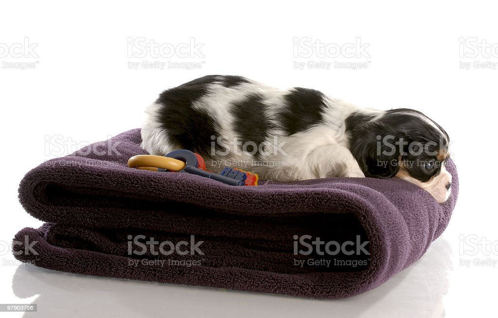 lonely puppy royalty-free stock photo