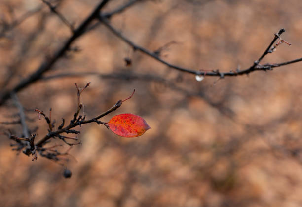 Lonely red leaf in wet autumn park stock photo