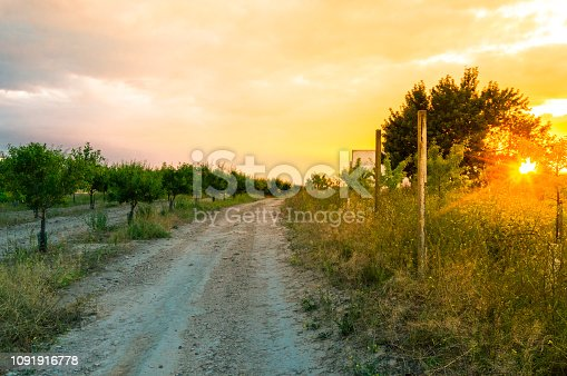 Lonely road of a rural field full of almond trees during sunset. Summer landscape with beautiful and bright sunbeams.