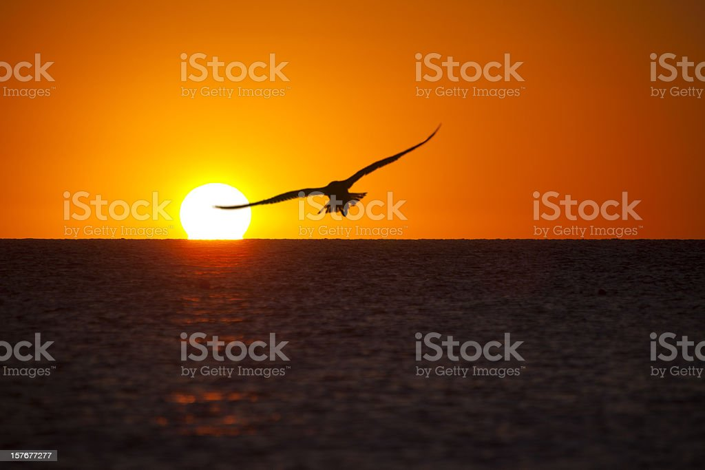 Lonely seagull at the sunset royalty-free stock photo